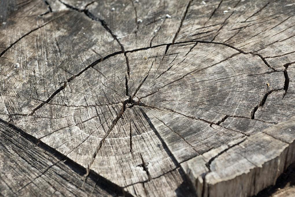 wood-366735_1920.png