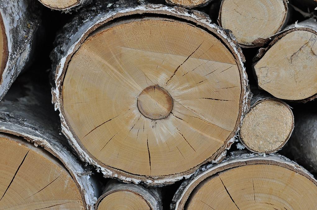 wood-498736_1920.png